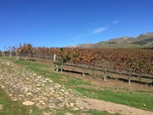 The vineyards right outside the tasting room at Talley.
